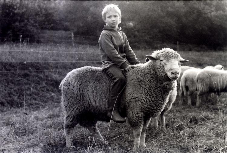 Merinolangwollschaf Bock (4-jährig, 1984) mit Sohn Marco